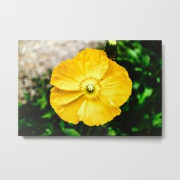 Flower Photography by RedTiger_K Metal Print