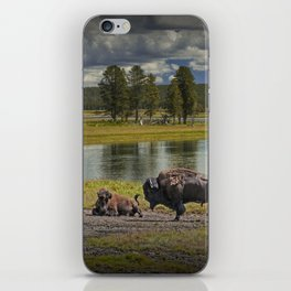 Buffalo by Yellowstone River iPhone Skin