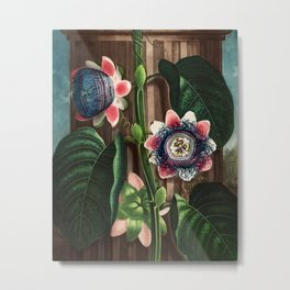 Robert John Thornton - The Quadrangular Passion Flower Metal Print
