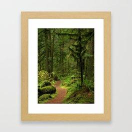The Deep Woodland  Path... Framed Art Print