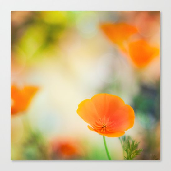 Poppy Rainbow Canvas Print