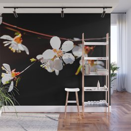 Beautiful, Delicate Japanese Apricot Flowers Against The Black Background Wall Mural