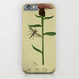 Flower Black Knapweed centaurea nigra17 iPhone Case
