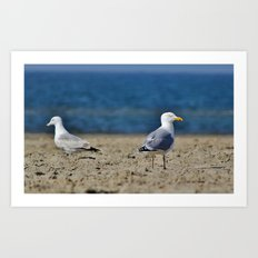 Two seagulls Art Print
