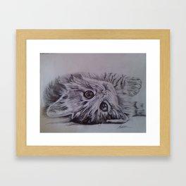 Cute little cat Framed Art Print