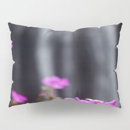Photography Pillow Sham