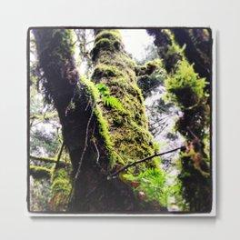 Tree Climbing  Metal Print