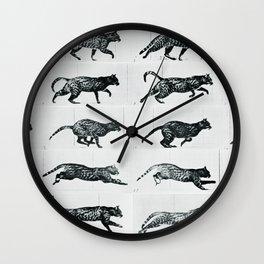 Time Lapse Motion Study Cat Monochrome Cat Mom Herding Cats Wall Clock