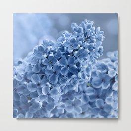 Lilac blue 281 Metal Print