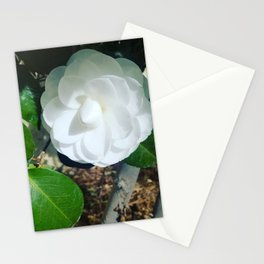 Loan Beauty Stationery Cards