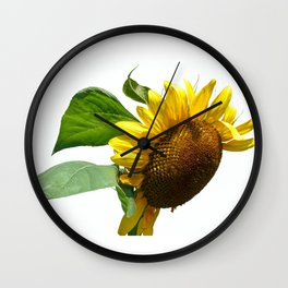 isolated sunflower on white background Wall Clock