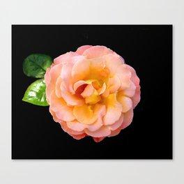 Orange ,Rosa Rose Canvas Print