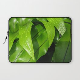 From the Conservatory #42 Laptop Sleeve