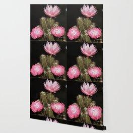 Pink Cactus Wallpaper