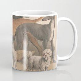 Vintage Dog Breeds Illustration (1874) Coffee Mug