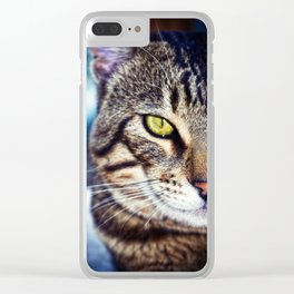 Bengal Tom Tabby Cat Portrait Clear iPhone Case