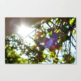 Dazed Canvas Print