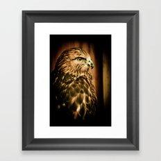 Hawk Eye Framed Art Print