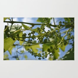 Grapevine buds against a beautiful sky Rug
