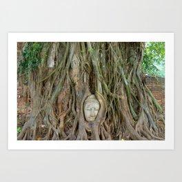 Buddha Head in Tree Roots Art Print