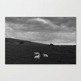 Sheep in Black Canvas Print