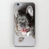 french bulldog iPhone & iPod Skins featuring French Bulldog by Falko Follert Art-FF77