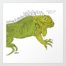 Iguana Iguana Art Print