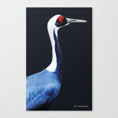 Asian White Naped Crane Canvas Print