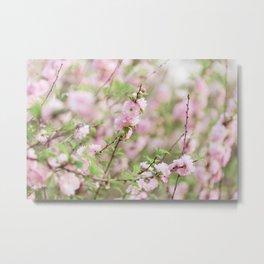 Spring in Pink #3 Metal Print