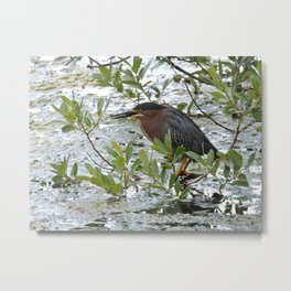 Green Heron at Lakeside Metal Print