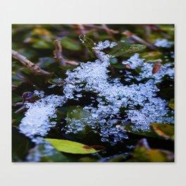 Icy Webb Canvas Print