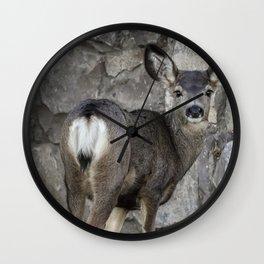 Young Mule Deer Wall Clock