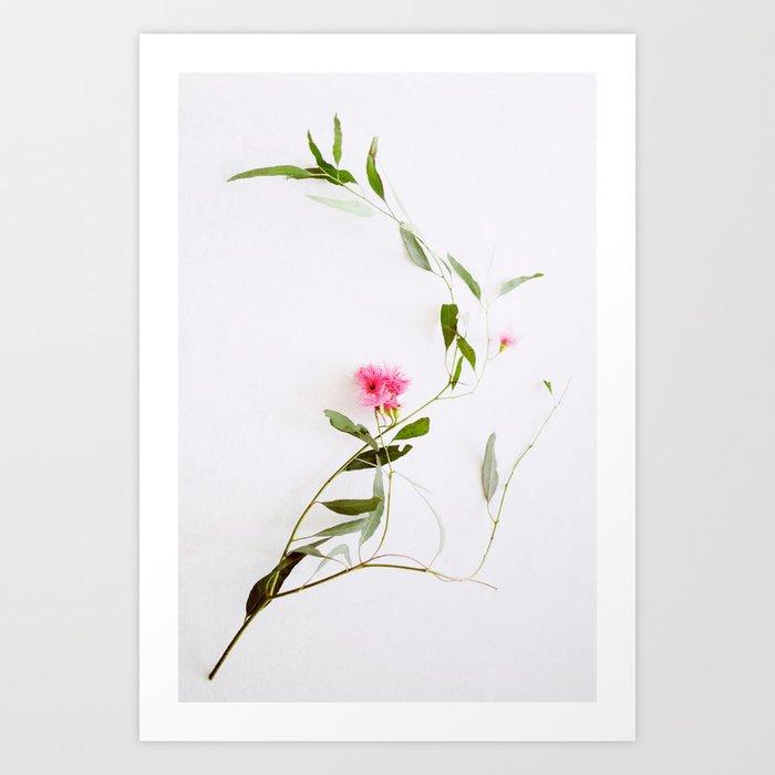 Eucalyptus Sway Art Print