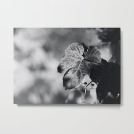 Autumn Grape Leaf in Black and White Metal Print