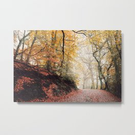Path through the Autumn Forest Metal Print