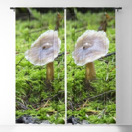 Fungi and moss Blackout Curtain