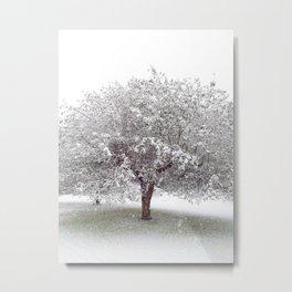 Apple Tree In Snow Metal Print