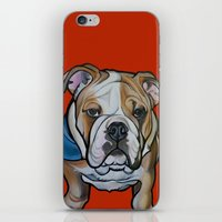 english bulldog iPhone & iPod Skins featuring Johnny the English Bulldog by Pawblo Picasso