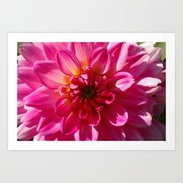 Dalia, flower close-up Art Print