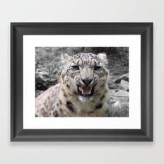 Angry snow leopard Framed Art Print