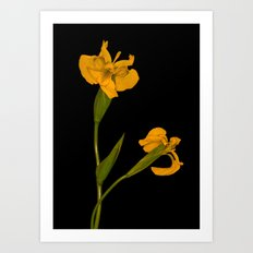 Wild Summer Iris II Art Print