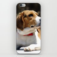 beagle iPhone & iPod Skins featuring Beagle by Artistically Home