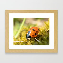 Lady of the bugs Framed Art Print