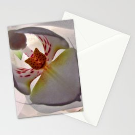 Cat in the Orchid Stationery Cards
