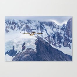 Austral Patagonian Bird Flying Canvas Print