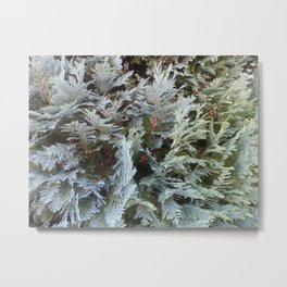 Thuja tree Metal Print