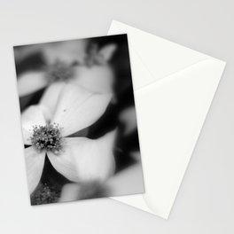Dogwood Nights Stationery Cards