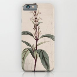 Flower 635 justicia gendarussa Willow leaved Justicia13 iPhone Case