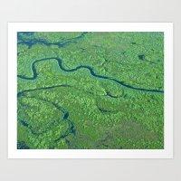 Myakka River Art Print