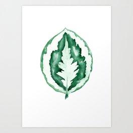Calathea Leaf Watercolour Painting Art Print